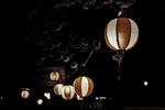 Yozakura (夜桜)